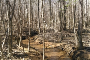 Orion Recreational and Timber Investment - Pike County AL