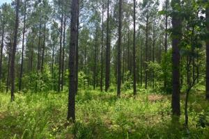 Shiloh Hunting and Timber Investment - Talbot County GA