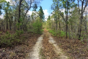 Williston Hunting and Country Farmland - Aiken County SC