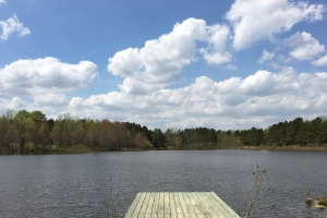 Edgefield Pond Tract - Edgefield County SC