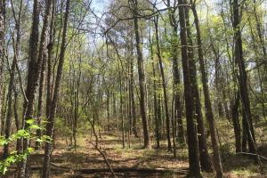 Chubbehatchee Creek Tract - Elmore County AL