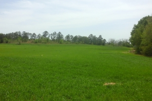 Bells Crossroads Investment - Barbour County AL