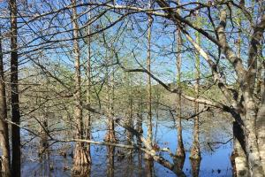 Hashuqua Creek - Noxubee County MS