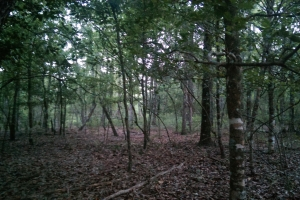 The South Prong Taylors Creek Tract in Washington, AL (1 of 12)