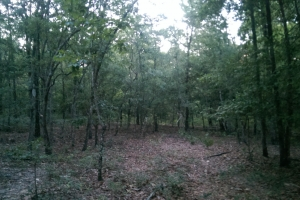 The South Prong Taylors Creek Tract in Washington, AL (8 of 12)