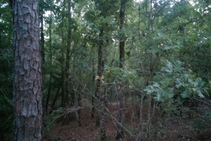 The South Prong Taylors Creek Tract in Washington, AL (2 of 12)
