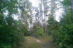 The South Prong Taylors Creek Tract in Washington, AL (5 of 12)