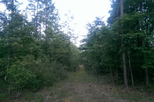 The South Prong Taylors Creek Tract in Washington, AL (10 of 12)