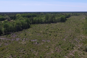 Little Creek Investment Opportunity - Wayne County GA
