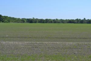 70 Acres Row Crop and Duck Hunting Land - Jefferson County AR