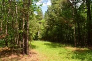 Athens Timberland with Development Opportunity - Jackson County GA