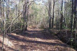 Cane Creek Timber and Hunting Tract - Pulaski County AR