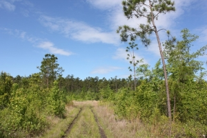 Wooded Recreational Opportunity - Dorchester County SC