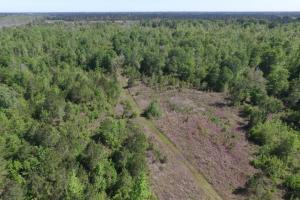 Buck Swamp Road Homesite  - Glynn County GA