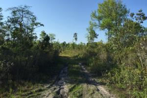 Photo 8 of 18  ·  8 of 18 Photos for Private Hunting Tract in Glynn County, GA