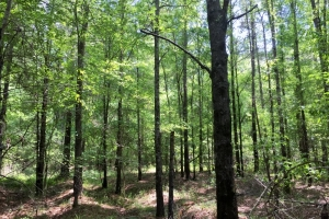 Summerton Timber & Recreation Tract - Clarendon County SC