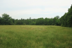 Leesville Hunting Homeplace - Saluda County SC