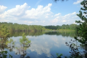 Bishopville Hunting & Pond Tract - Lee County SC