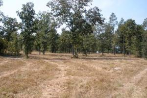 11 Acre Hound Hollow Equestrian Land - Kershaw County SC