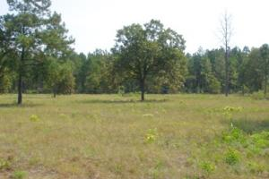10 Acre Hound Hollow Equestrian Land - Kershaw County SC