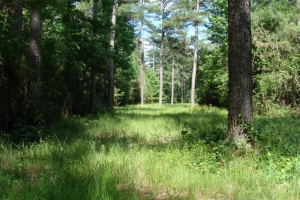 160 Acre Timberland investment / hunting - Cleveland County, AR
