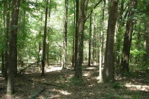 Dallas County Hunting Tract - Dallas County AL