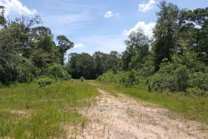 Photo 4 of 6  ·  4 of 6 Photos for Recreation & Timber Investment with Development Potential in San Jacinto County, TX