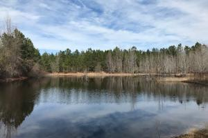 Blundale Pond Hunting/Homesite Property - Emanuel County GA
