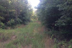 Moundville Hunting & Timber Tract - Hale County AL