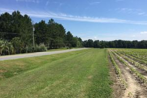 67.13 Acre Prime Residential Development  in Bulloch, GA (4 of 7)