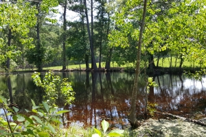 90 acre National Forest Ranch/Investment Property - Trinity County TX