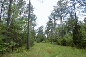 McConnells Hunting and Timber Investment - York County SC