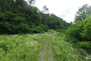 Photo 2 of 6  ·  2 of 6 Photos for Sevierville Mountain Acreage in Sevier County, TN