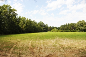 Brittons Neck Hunting & Timber Homesite