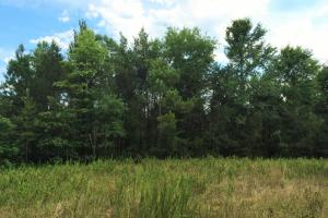 Charlies Creek Recreational Land - Abbeville County SC