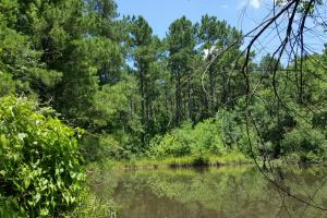 Davy Crockett National Forest Recreational/ Hunting/ Timberland Property - Trinity County TX