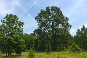Highway 601 Recreational Homesite - Kershaw County SC