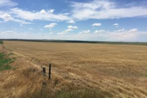 Photo 1 of 5  ·  1 of 5 Photos for Kit Carson County Farmland/Cropland For Sale in Kit Carson County, CO
