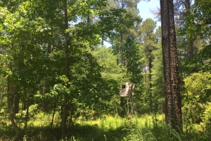 Summerton Hunting and Recreational Land - Clarendon County SC