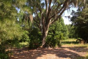 Brunswick Recreational Homesite - Glynn County GA