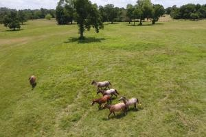 51 acre Texas Country Estate in Walker, TX (5 of 40)