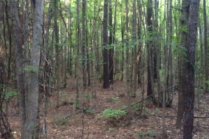 Marion Timber & Hunting Investment - Perry County AL