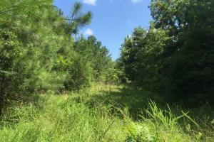 Little Mulberry Creek Tract - Autauga County AL