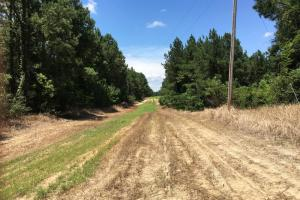 The Frankville Camp Tract in Washington County, AL (6 of 15)