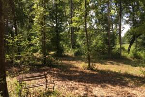 The Frankville Camp Tract in Washington County, AL (14 of 15)