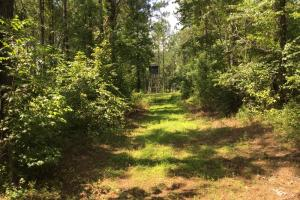 The Frankville Camp Tract in Washington County, AL (5 of 15)