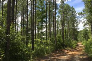 The Frankville Camp Tract in Washington County, AL (3 of 15)