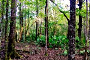 Tallahassee Timber and Hunting Land - Leon County FL