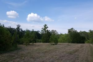 80 Acre Sam Houston Forest Recreational Tract in San Jacinto, TX (8 of 18)