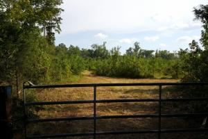 80 Acre Sam Houston Forest Recreational Tract in San Jacinto, TX (5 of 18)